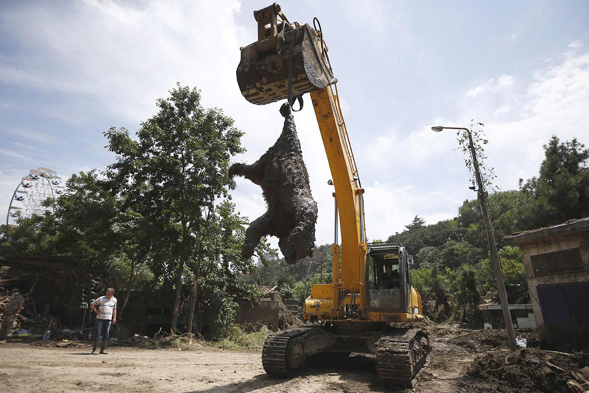 Tbilisi zoo flood tiger