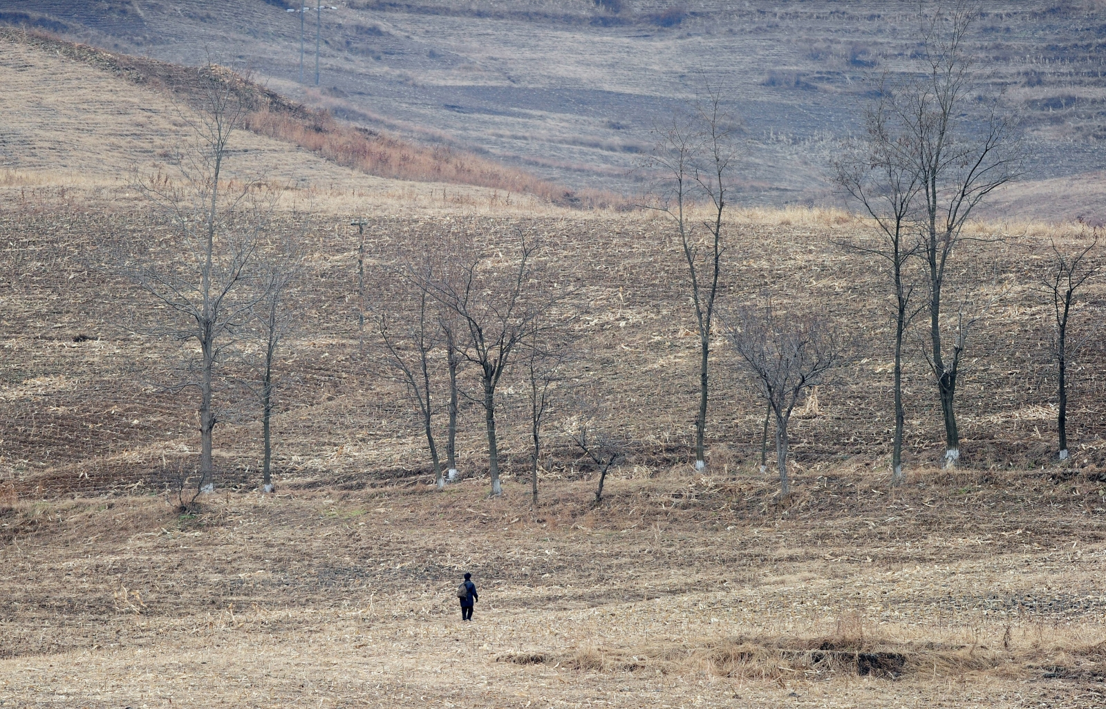 A North Korean woman walks