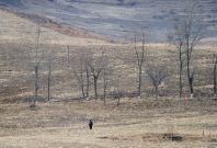 A North Korean woman walks