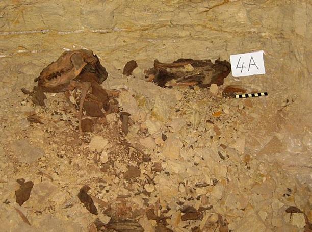 dog mummies egypt