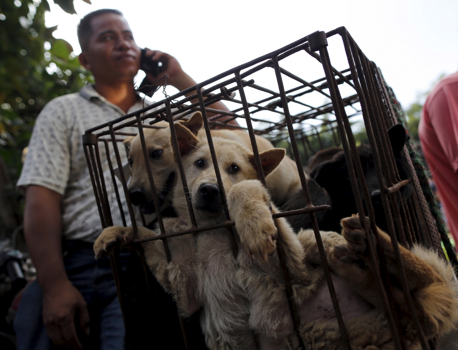 China S Dog Meat Festival 10 Things You Need To Know