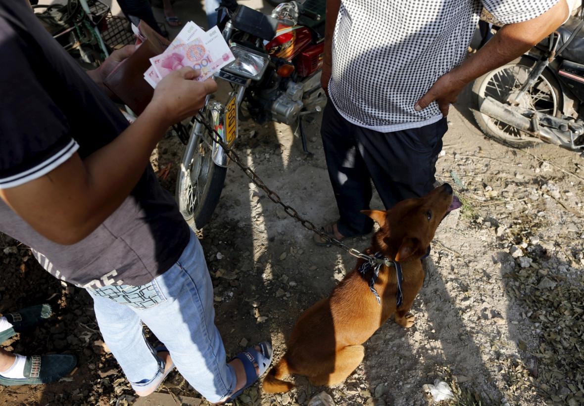 China dog meat festival