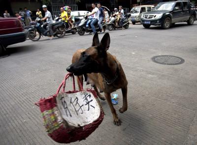 dog meat festival china
