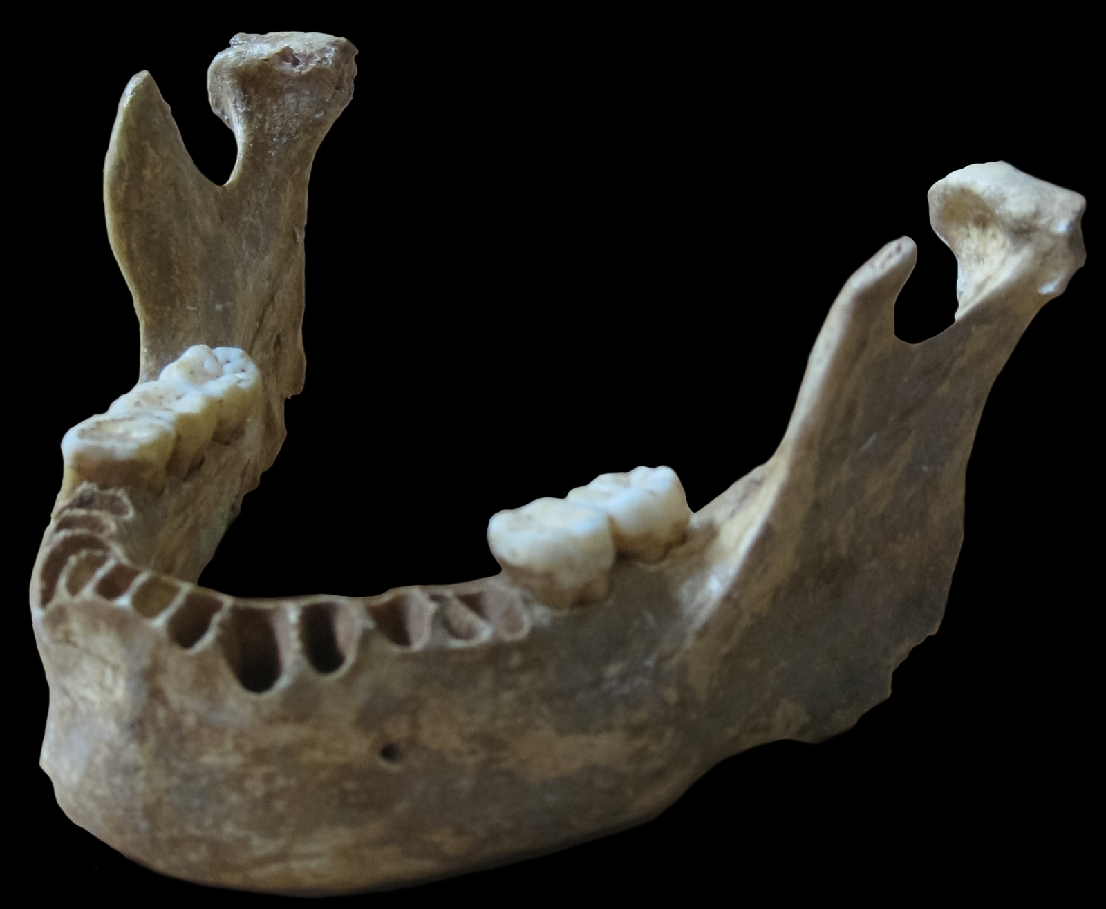 Neanderthal jaw bone