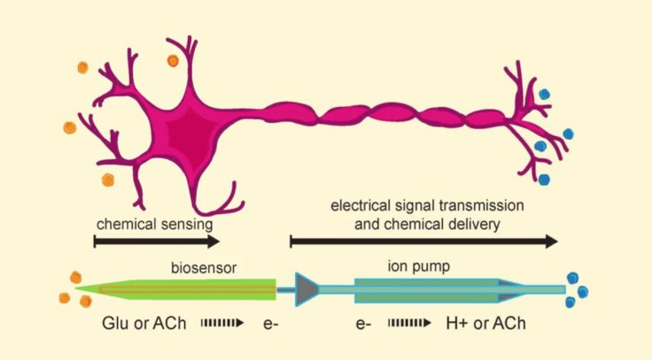 artificial intelligence neuron brain mimic