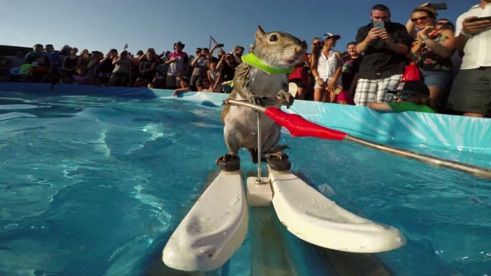 Water Skiing Squirrel GoPro Video Shows Dramatic Close Up