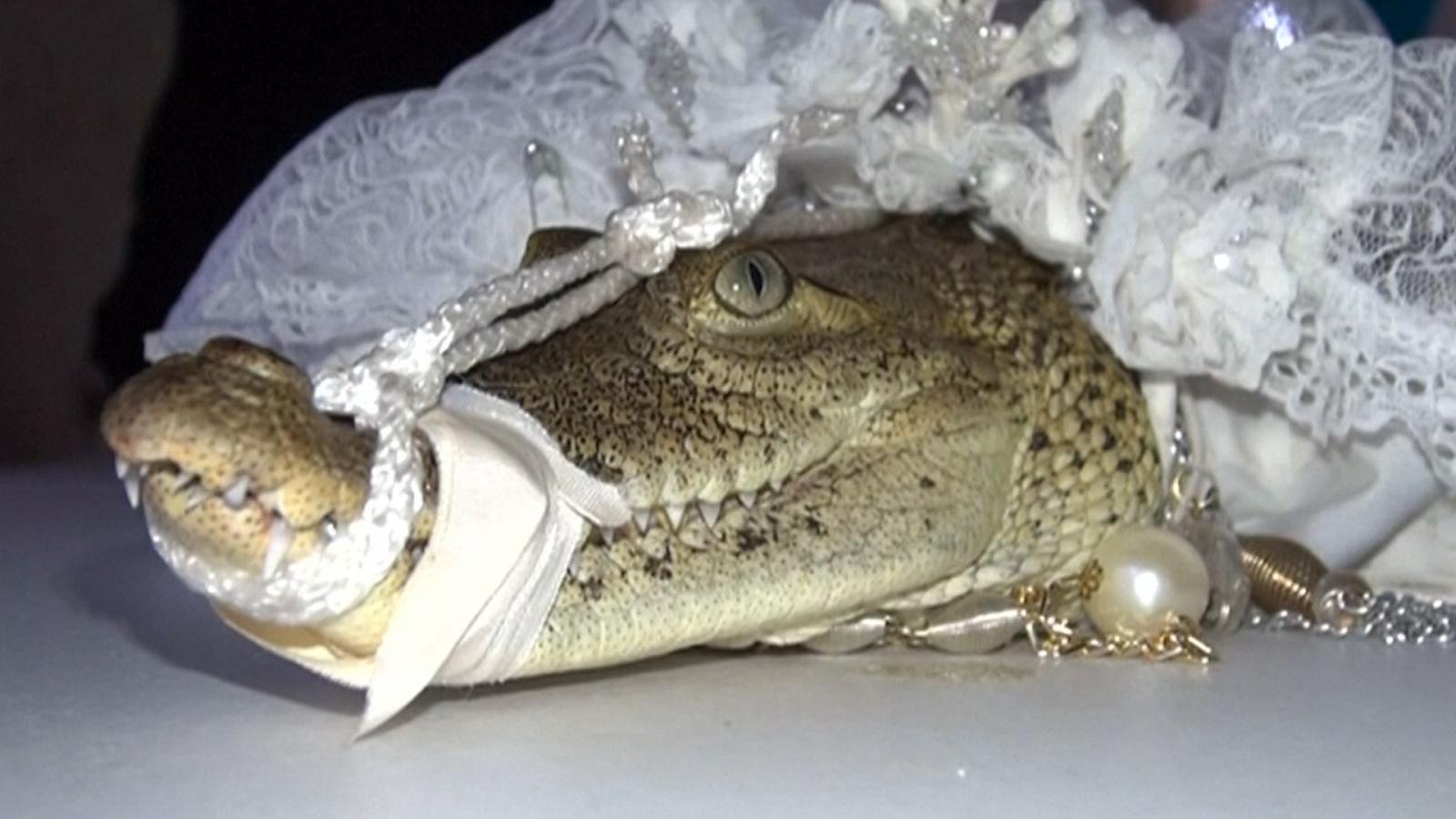crocodile wedding