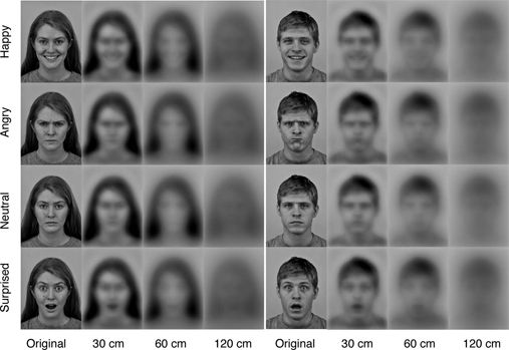 newborn vision perception