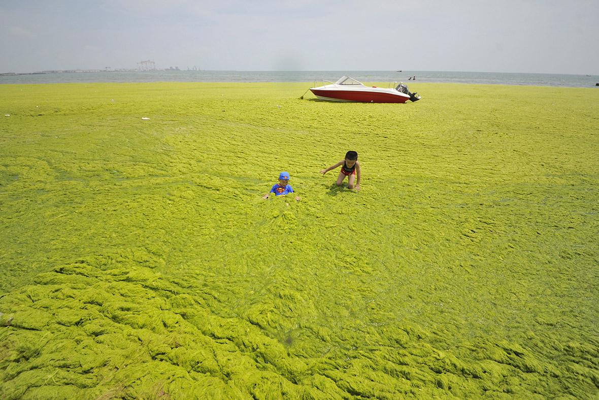 China: Yellow Sea turns green as Qingdao beaches are ...