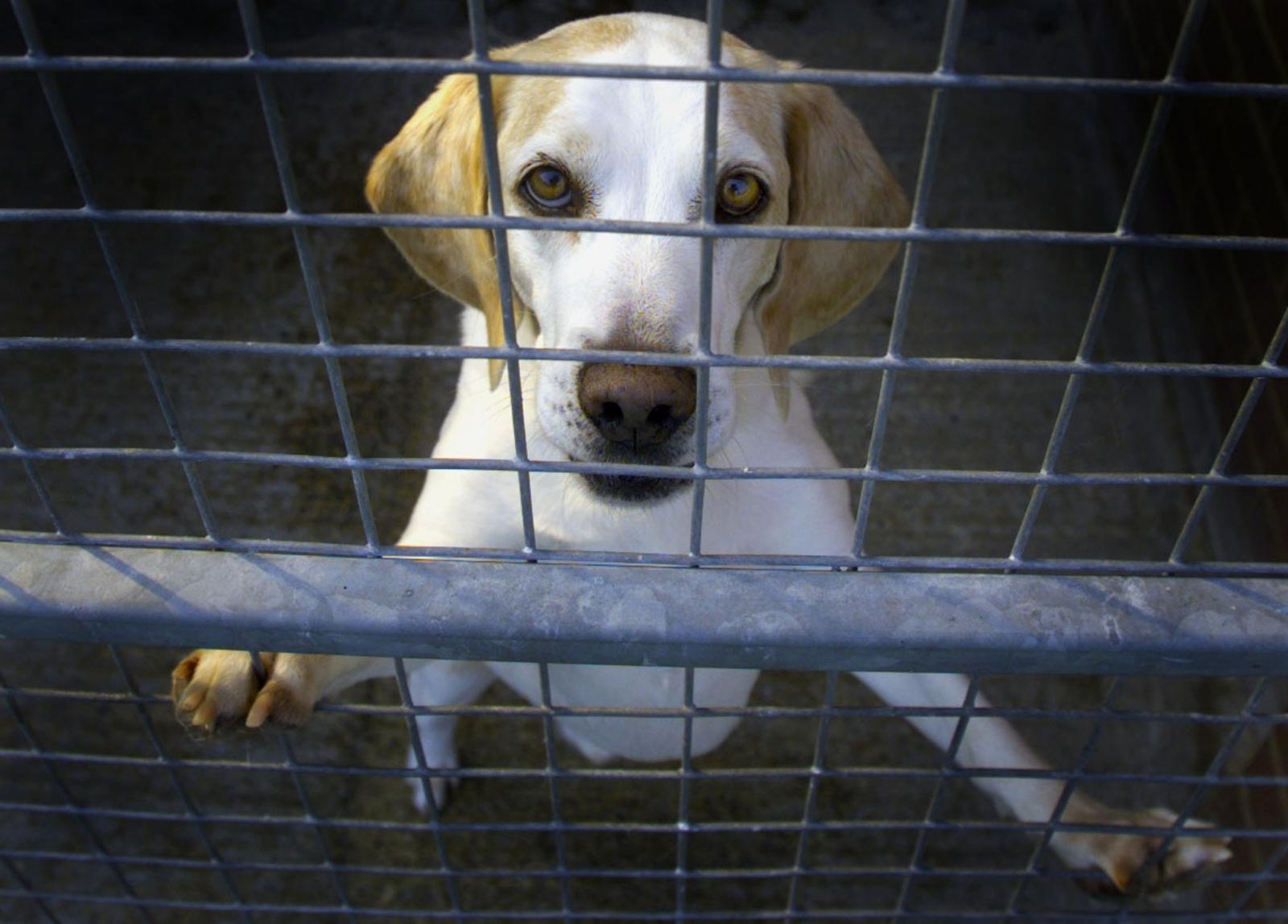 beagle farm