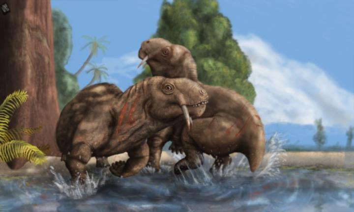 Tiarajudens Eccentricus 270 Million Year Old Pre Dinosaur Males Fought Like Modern Day Deer