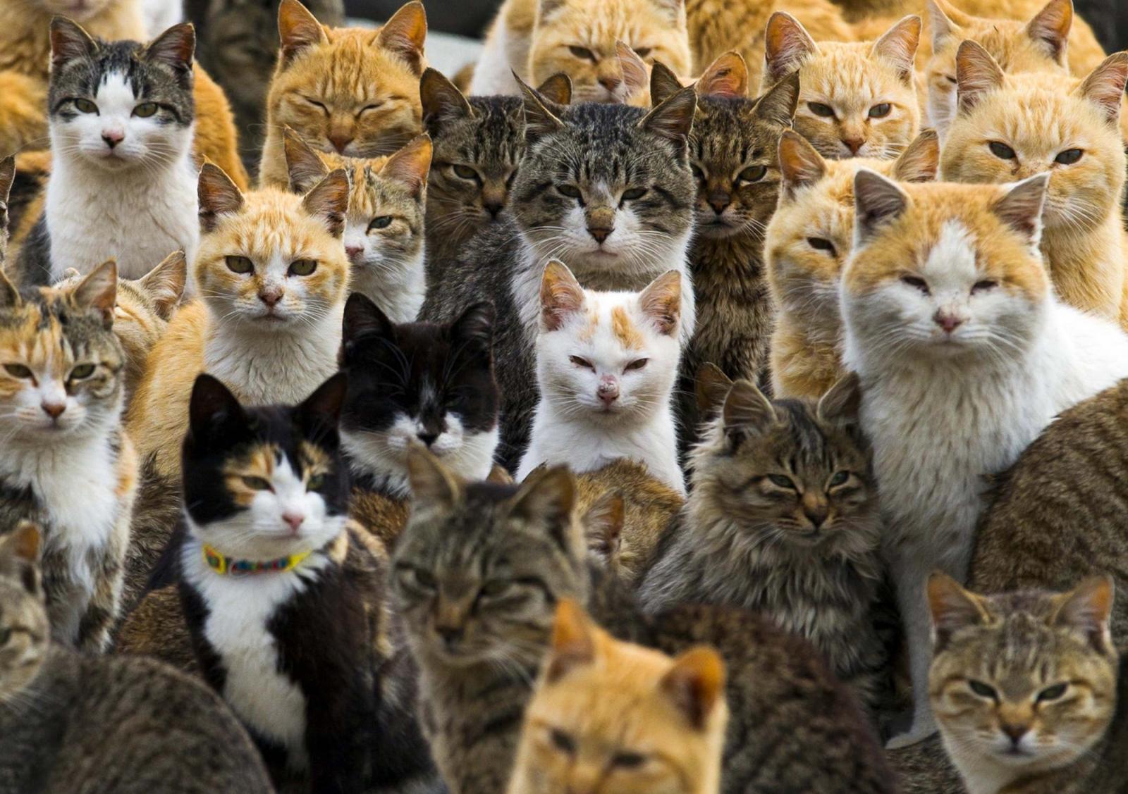 Australia feral cats