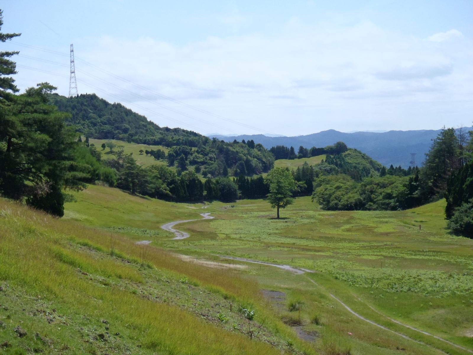 Kyoto Solar Farm Site