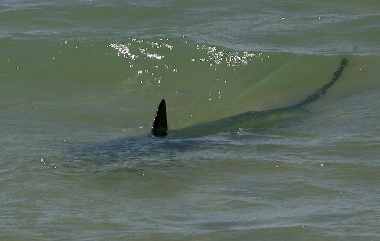 Shark Tarragona