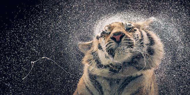 Tim Flach: Expressive animal portraits go on show at Retina