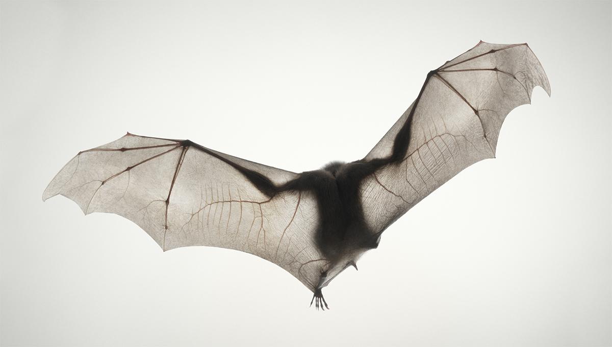 Tim Flach Expressive Animal Portraits Go On Show At Retina Photography Festival In Edinburgh