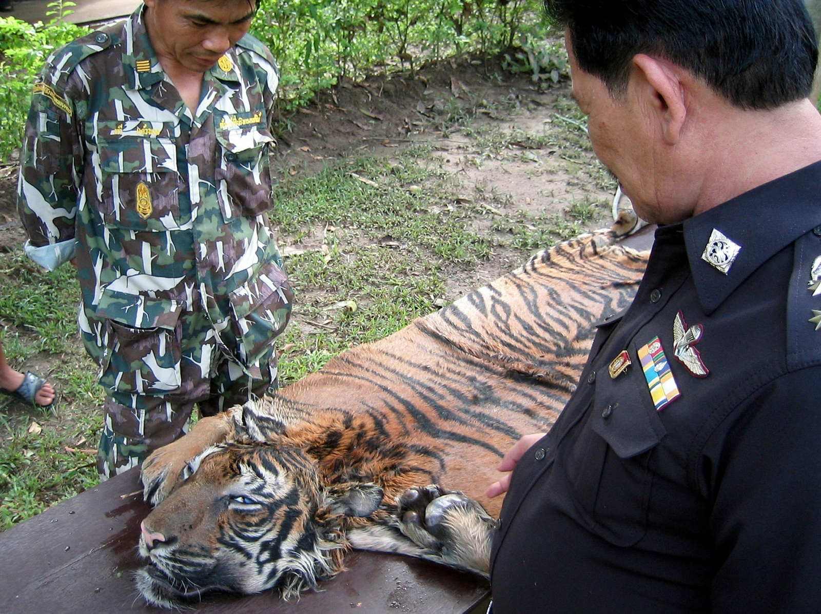 tiger poaching