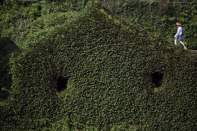 Abandoned village China covered ivy