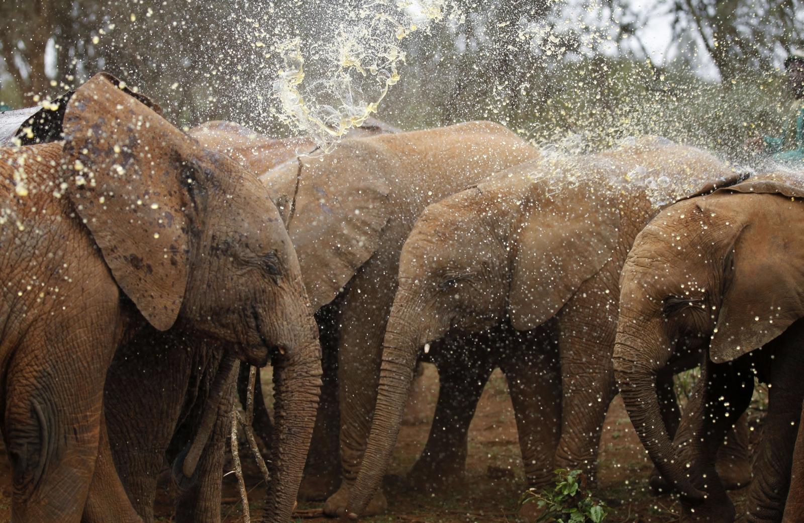Kenya elephant poaching