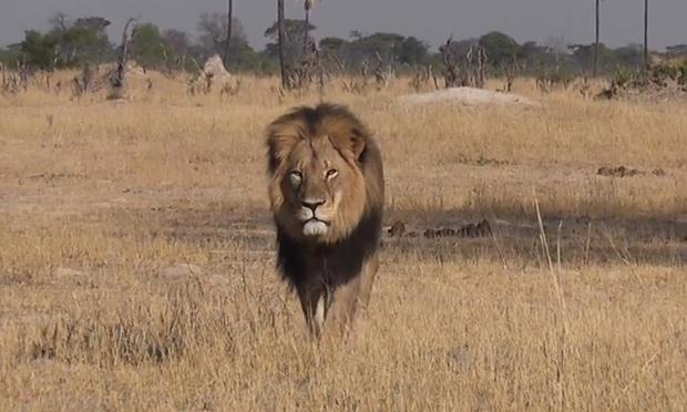 Cecil the lion