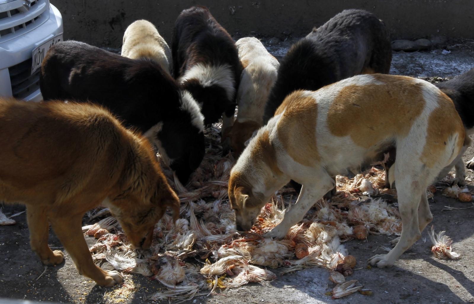 Kerala dog culling