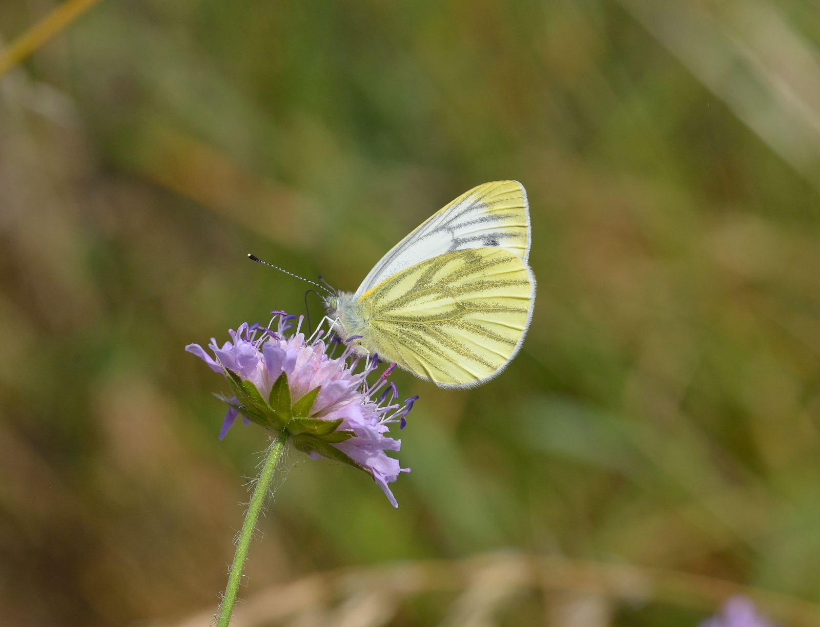 six uk butterfly species to go extinct by 2050 from