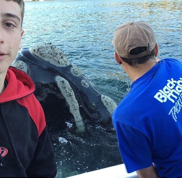 Whale rescue