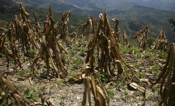 Guatemalan drought