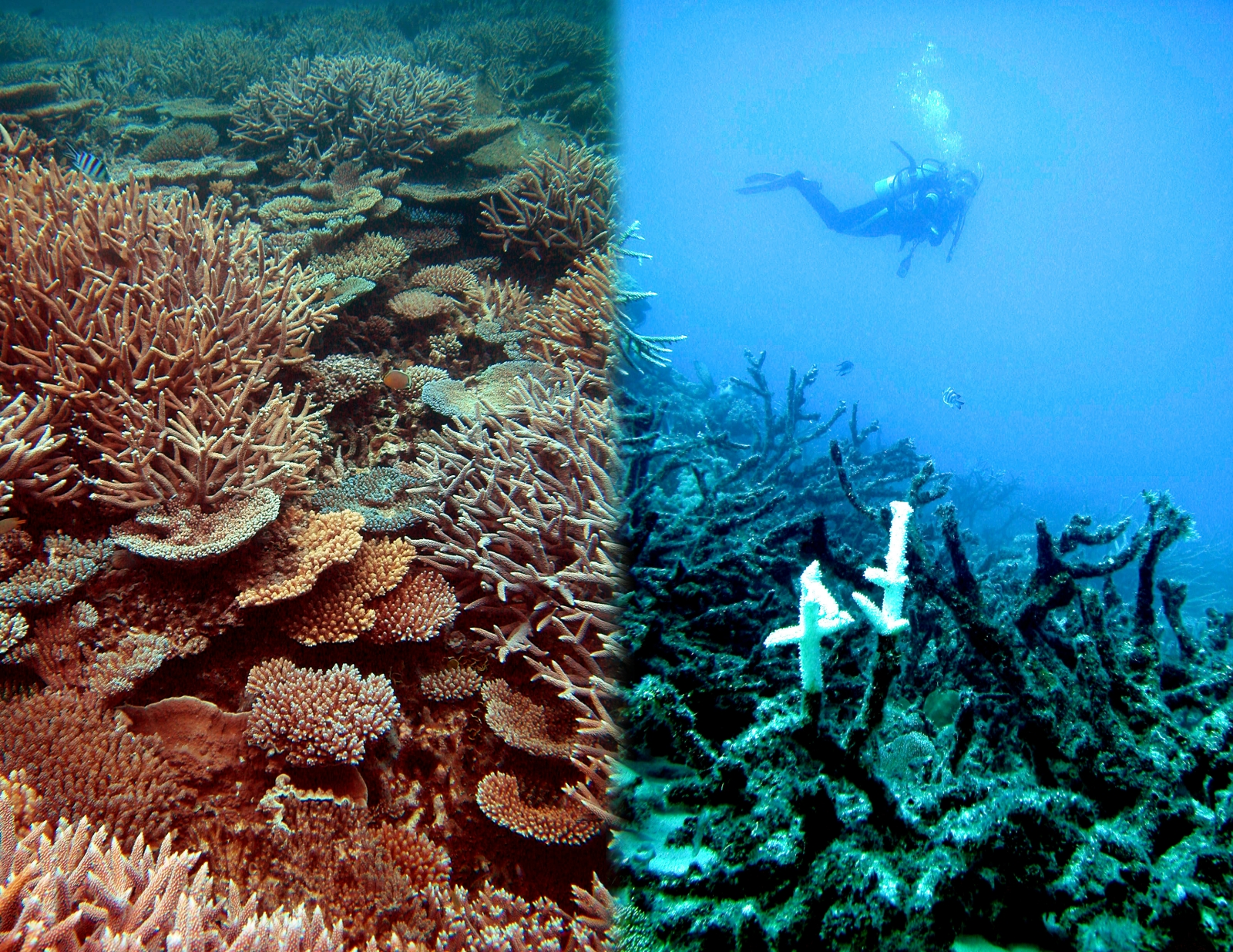 coral reef dying