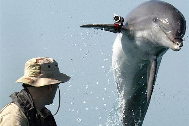 U.S. Navy Dolphin