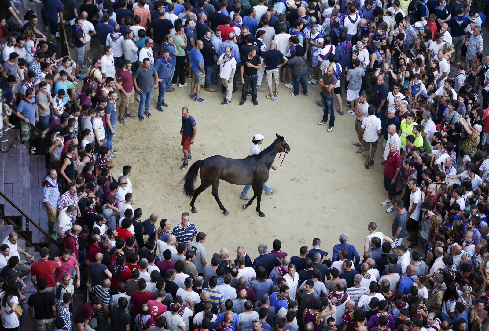 Palio di Siena Horse Race Italy