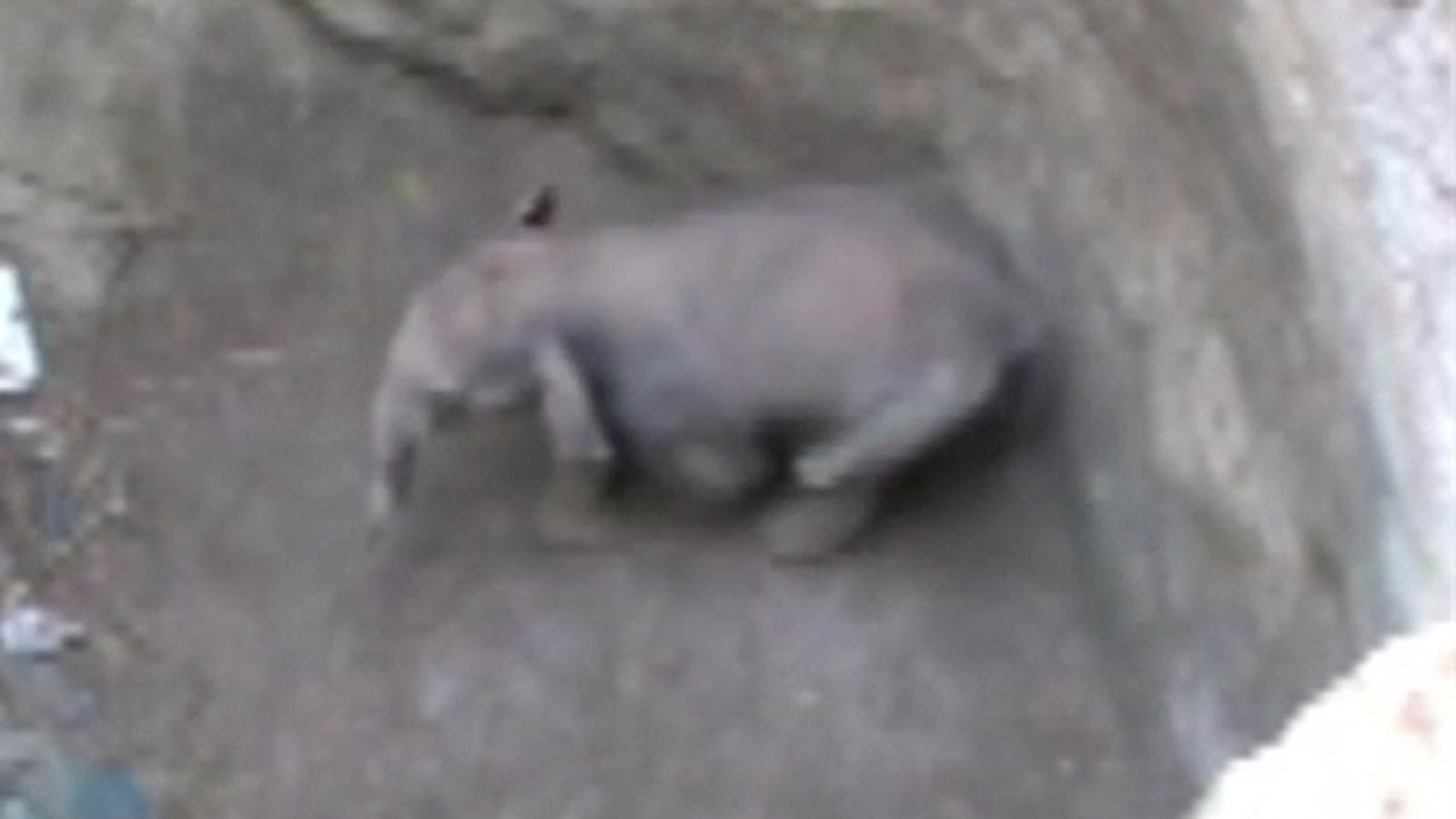 Baby elephant India