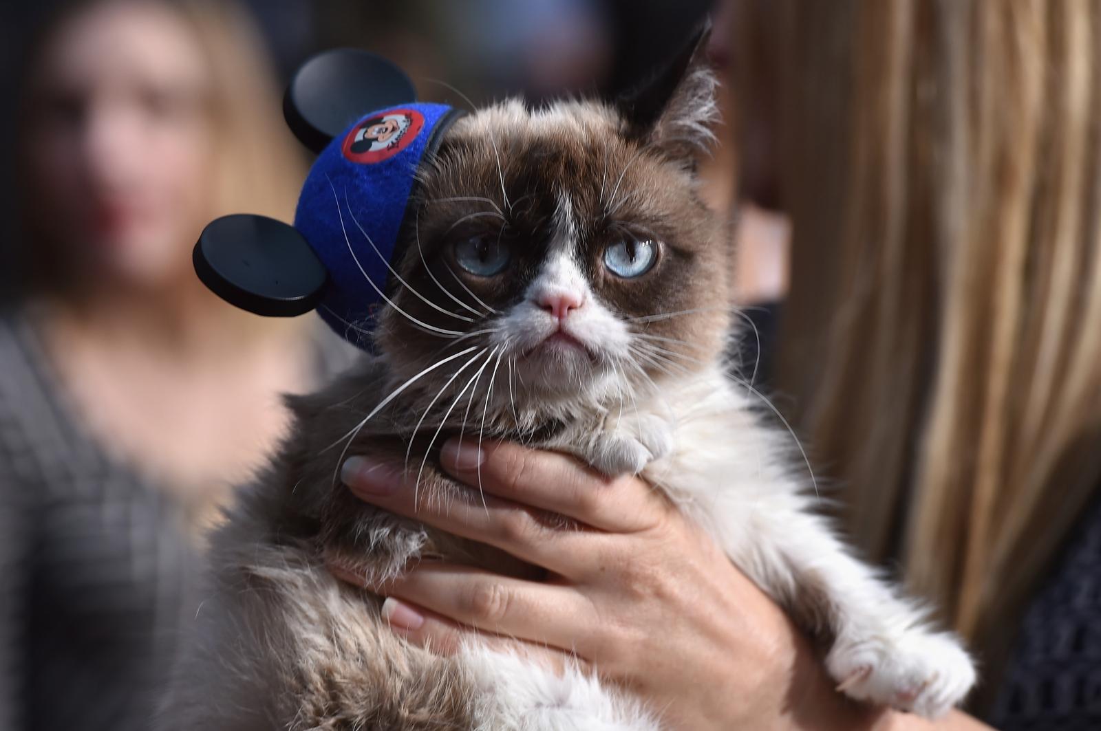 Smallest Cat Ever Grumpy Cat