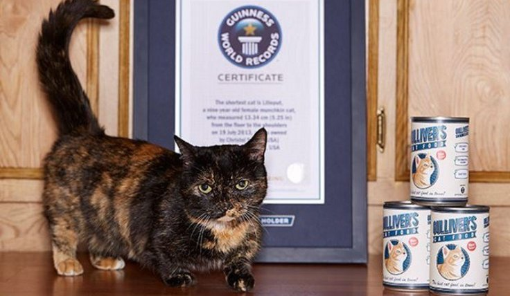 Guinness World Records 60th anniversary: 10 amazing record-breaking cats