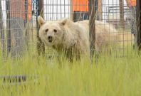 Elderly bears finally freed by PETA