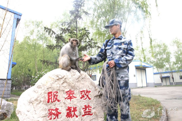 china macaque army
