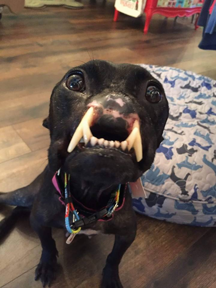 Dog Gets New Nose