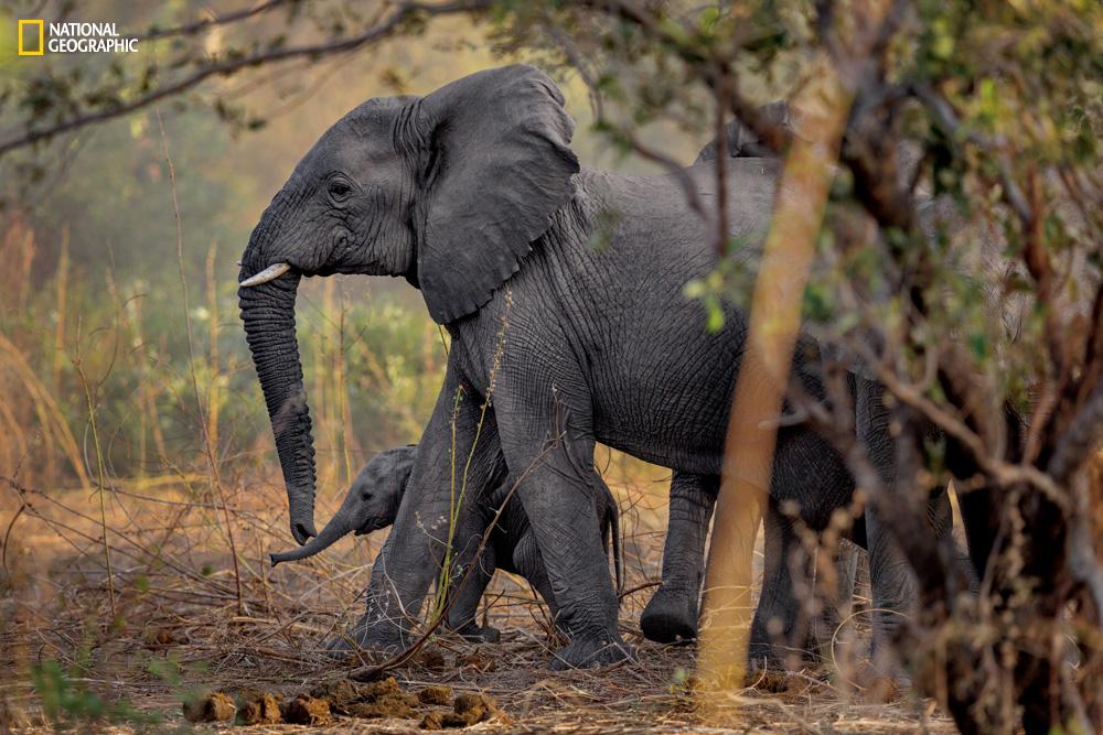 elephant poaching africa