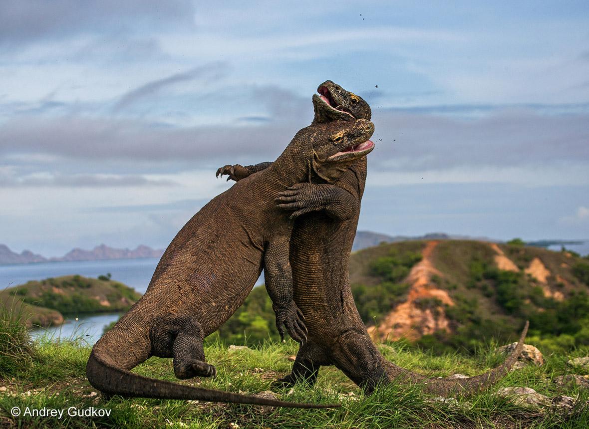 Wildlife Photographer of the Year 2015
