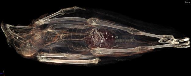 ancient egypt mummy kestrel