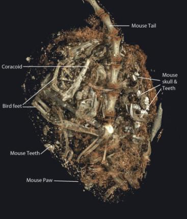 ancient egypt kestrel