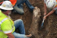 Cornerstone communities fossil