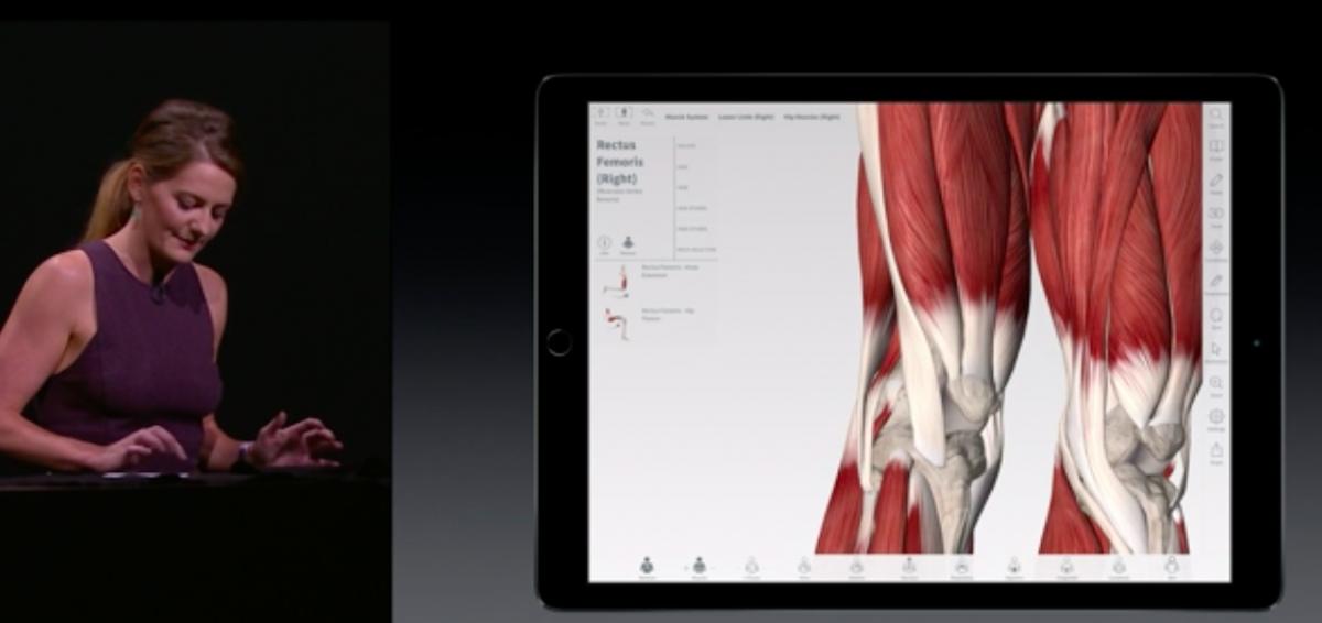 Apple Pencil 3D Medical Anatomy
