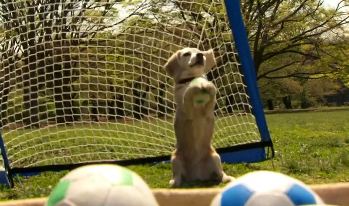 Guinness world record ball catching dog