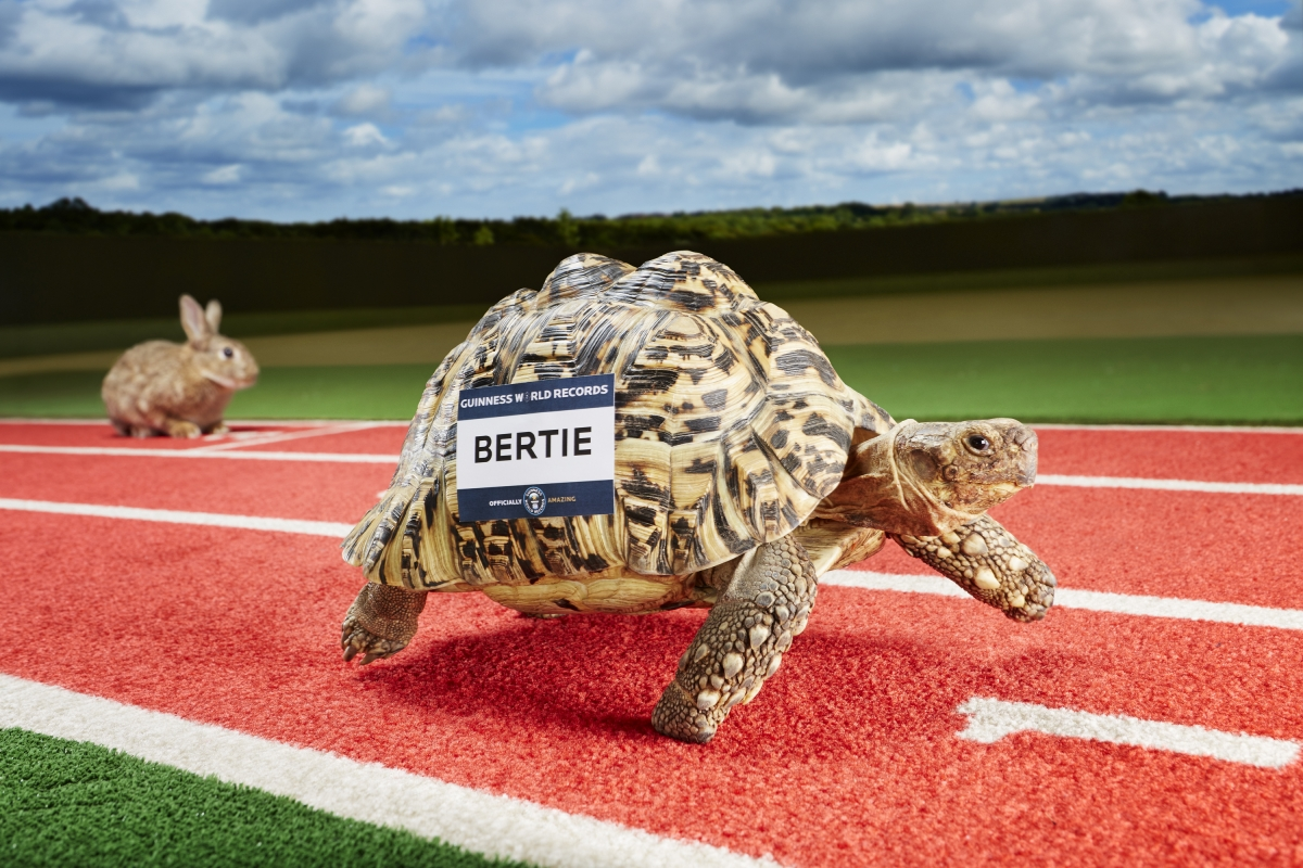 World's fastest tortoise Guinness world record