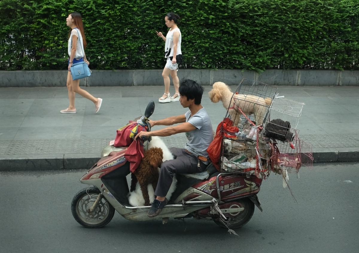 Dog cull China