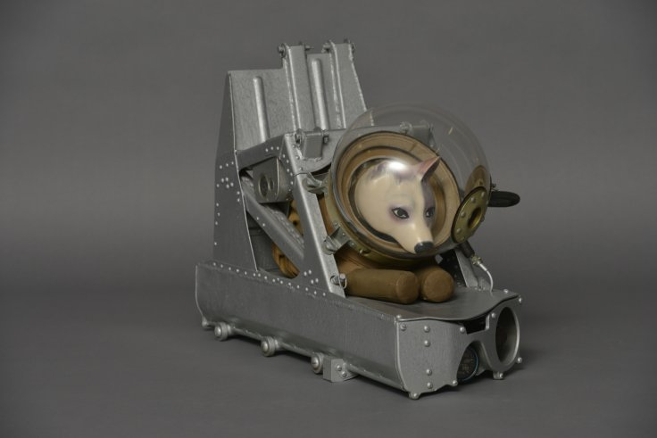 Dog ejector seat and suit
