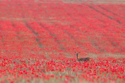 British Wildlife Photography Awards 2015