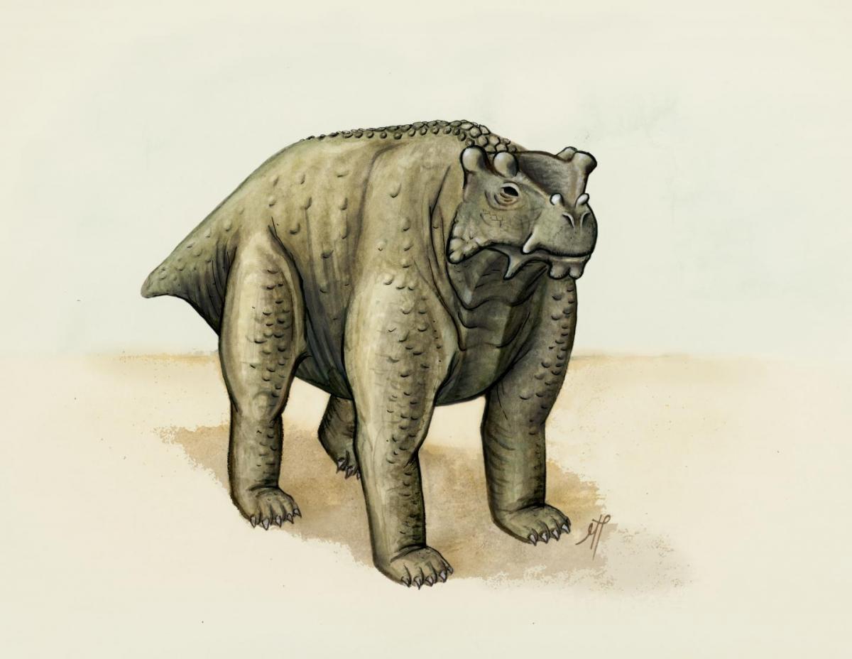 Bunostegos akokaensis