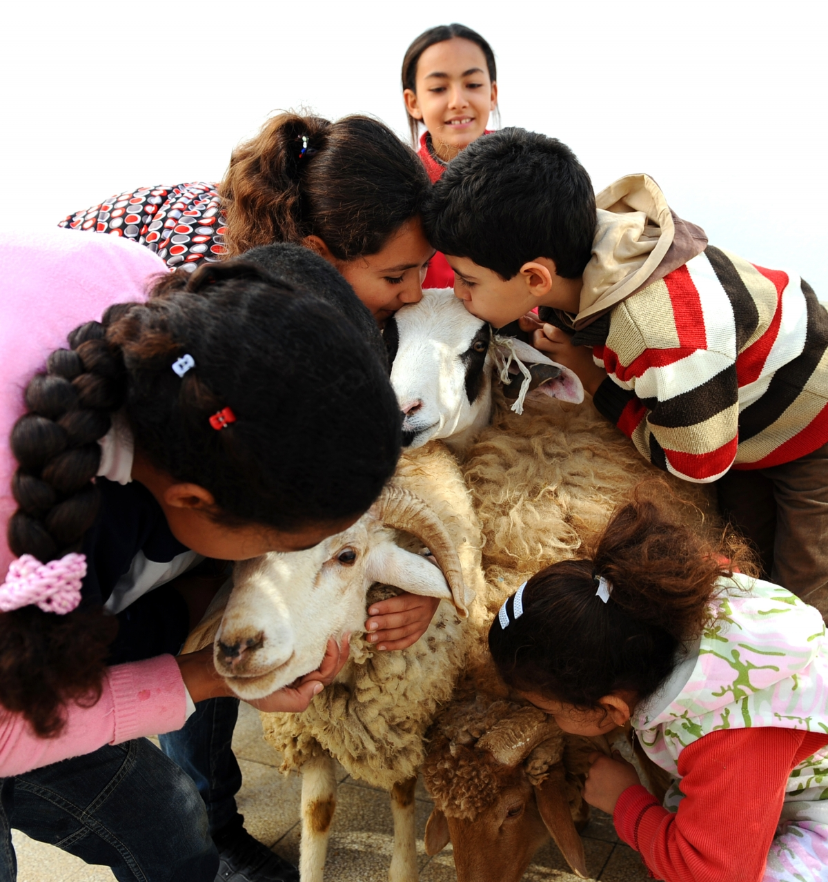 Tunisian children with sheep